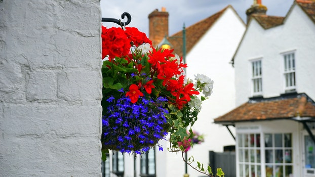 Free stock photo of nature, houses, red, flowers