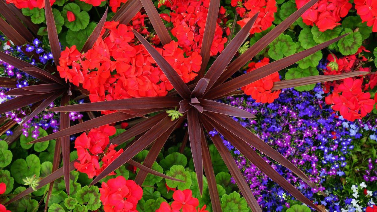 çok Renkli Yapraklı çiçeklerin Yakın çekim Fotoğrafçılığı