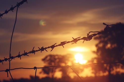 ağaçlar, bulanıklık, çit, dikenli tel içeren Ücretsiz stok fotoğraf