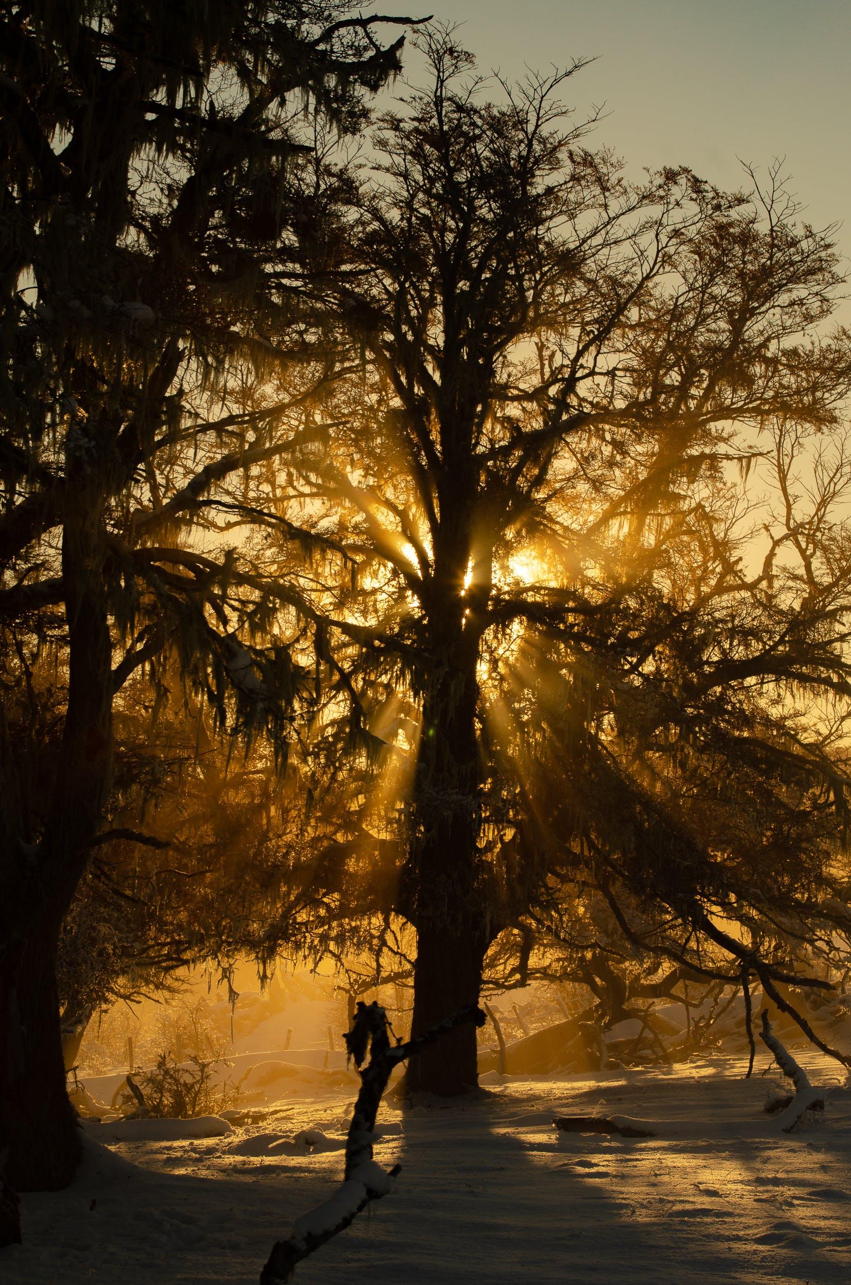 Kostenloses Stock Foto zu argentinien, bäume, dämmerung, draußen
