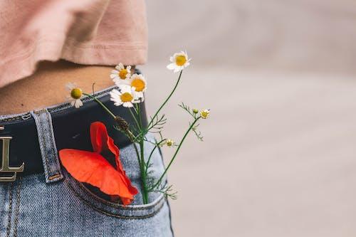 Immagine gratuita di cintura, colori, esterno, fiori