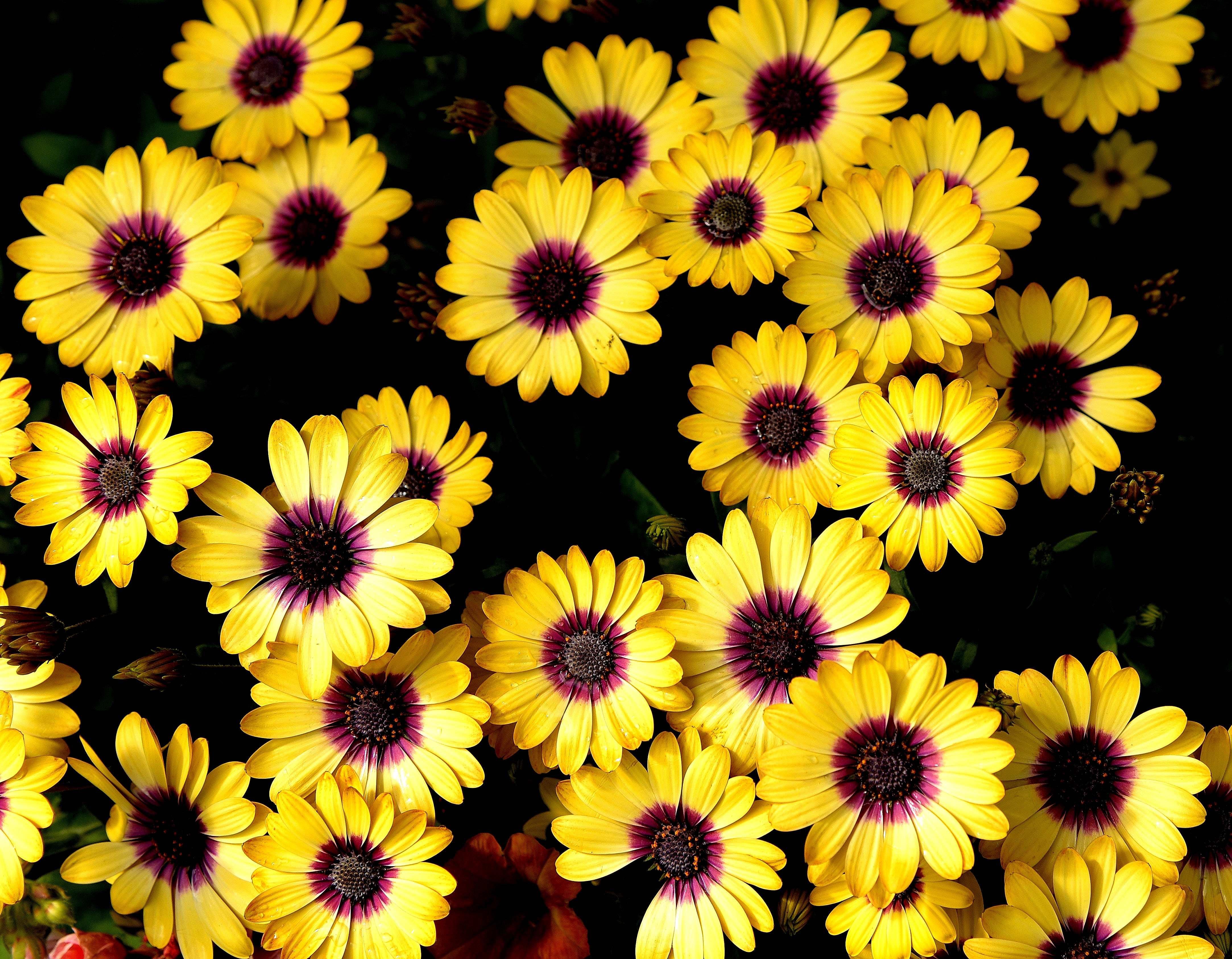 Δωρεάν στοκ φωτογραφιών με λουλούδι, ταπετσαρία φύσης, φύση