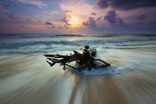 ağaç gövdesi, ahşap, dalgalar, deniz içeren Ücretsiz stok fotoğraf