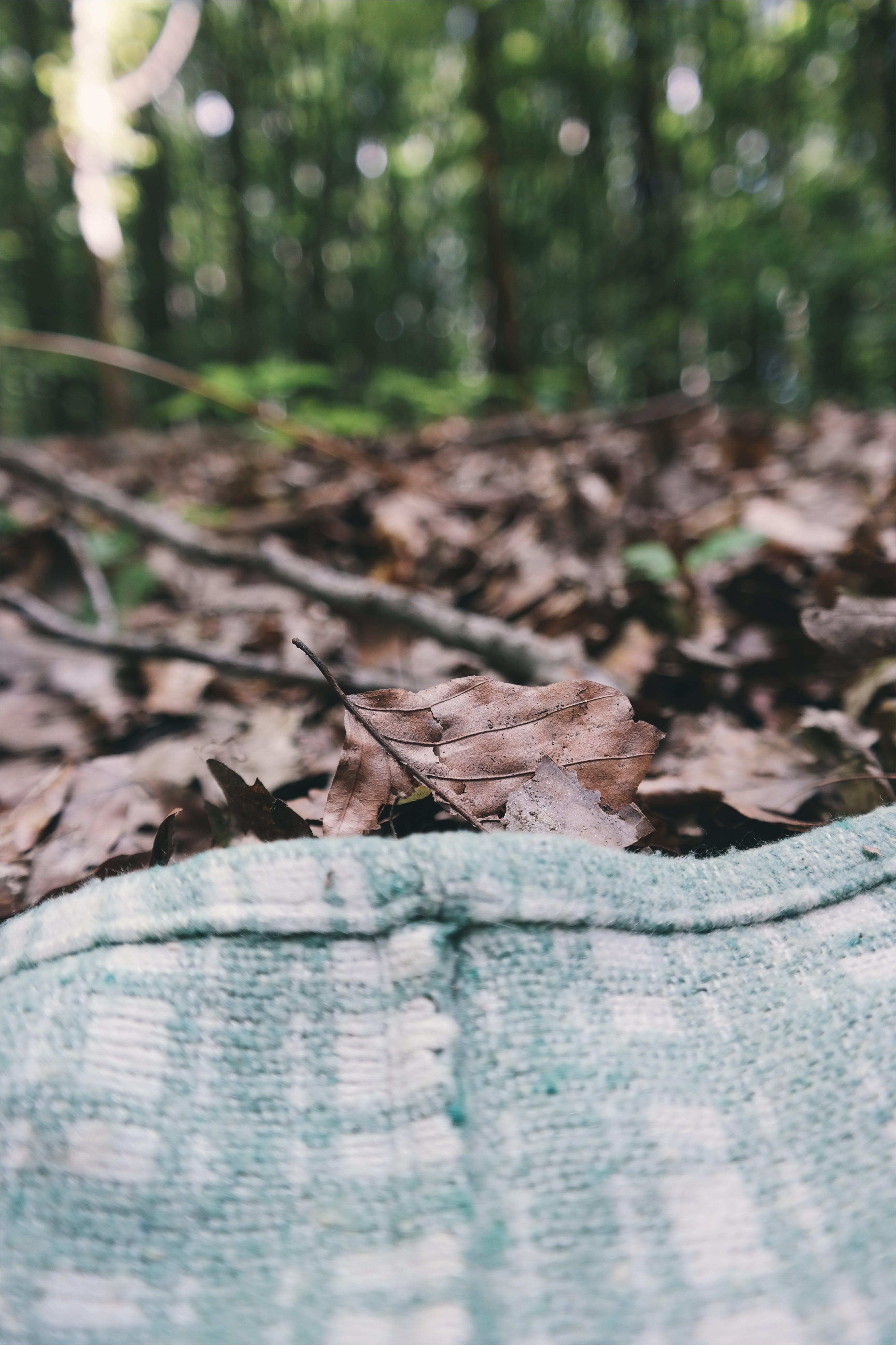 blanket, blur, close-up
