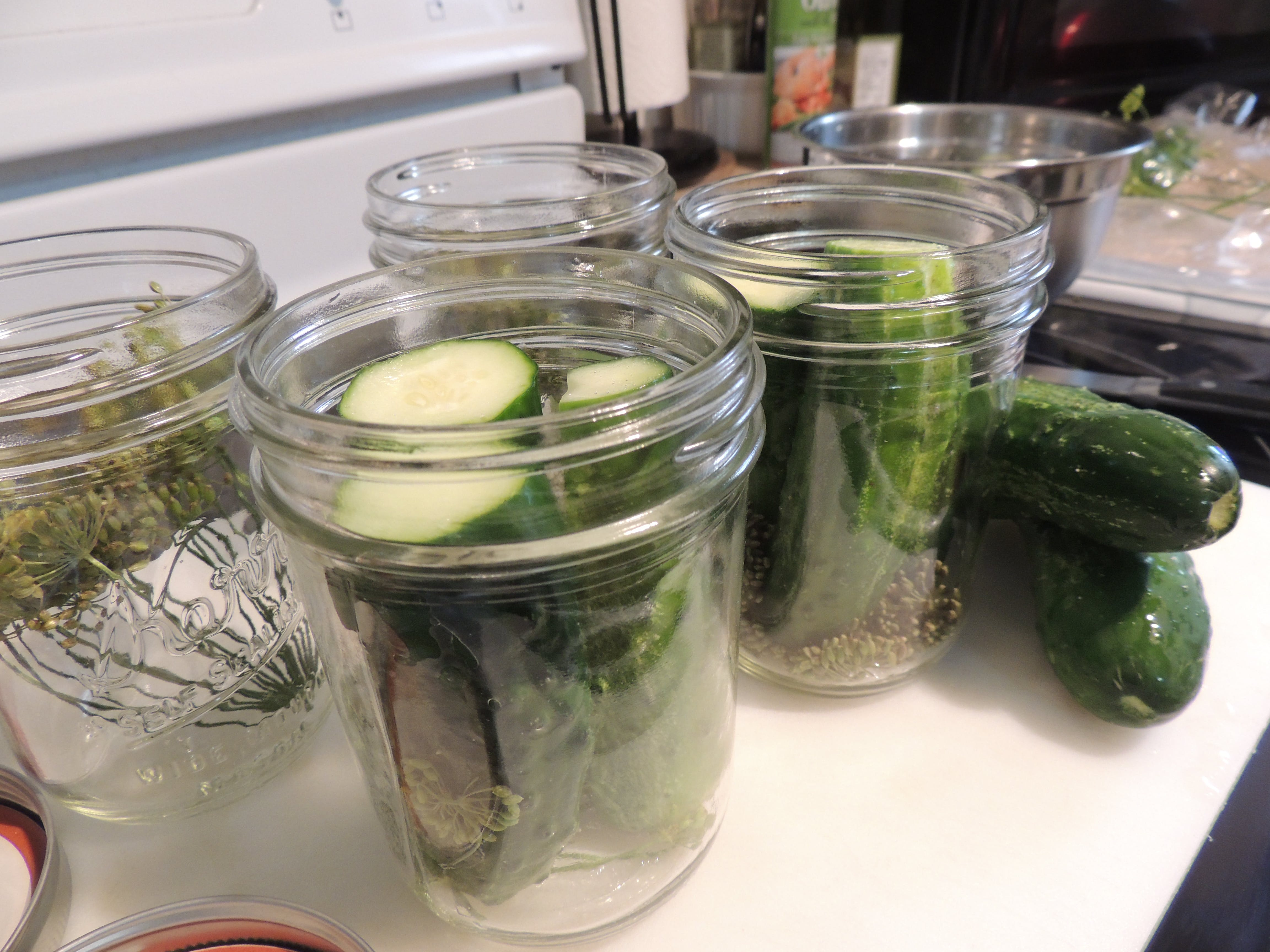 Free stock photo of cucumbers, dill, pickles, homemade pickles