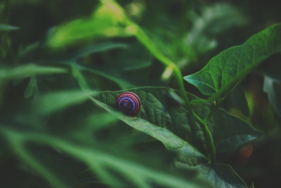 Blue and brown snail on green leaf plant