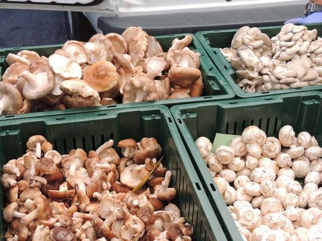 Free stock photo of mushrooms, farmers market, crimini, button mushrooms