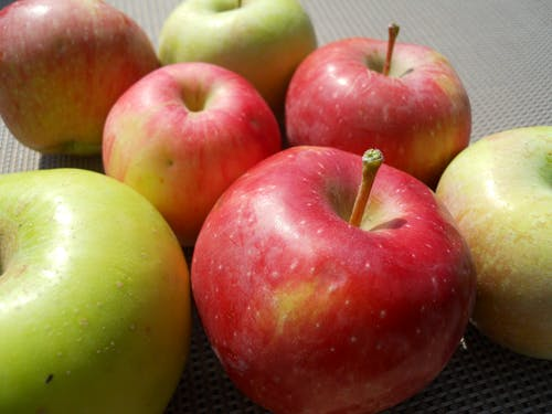 Free stock photo of apples, fall apples