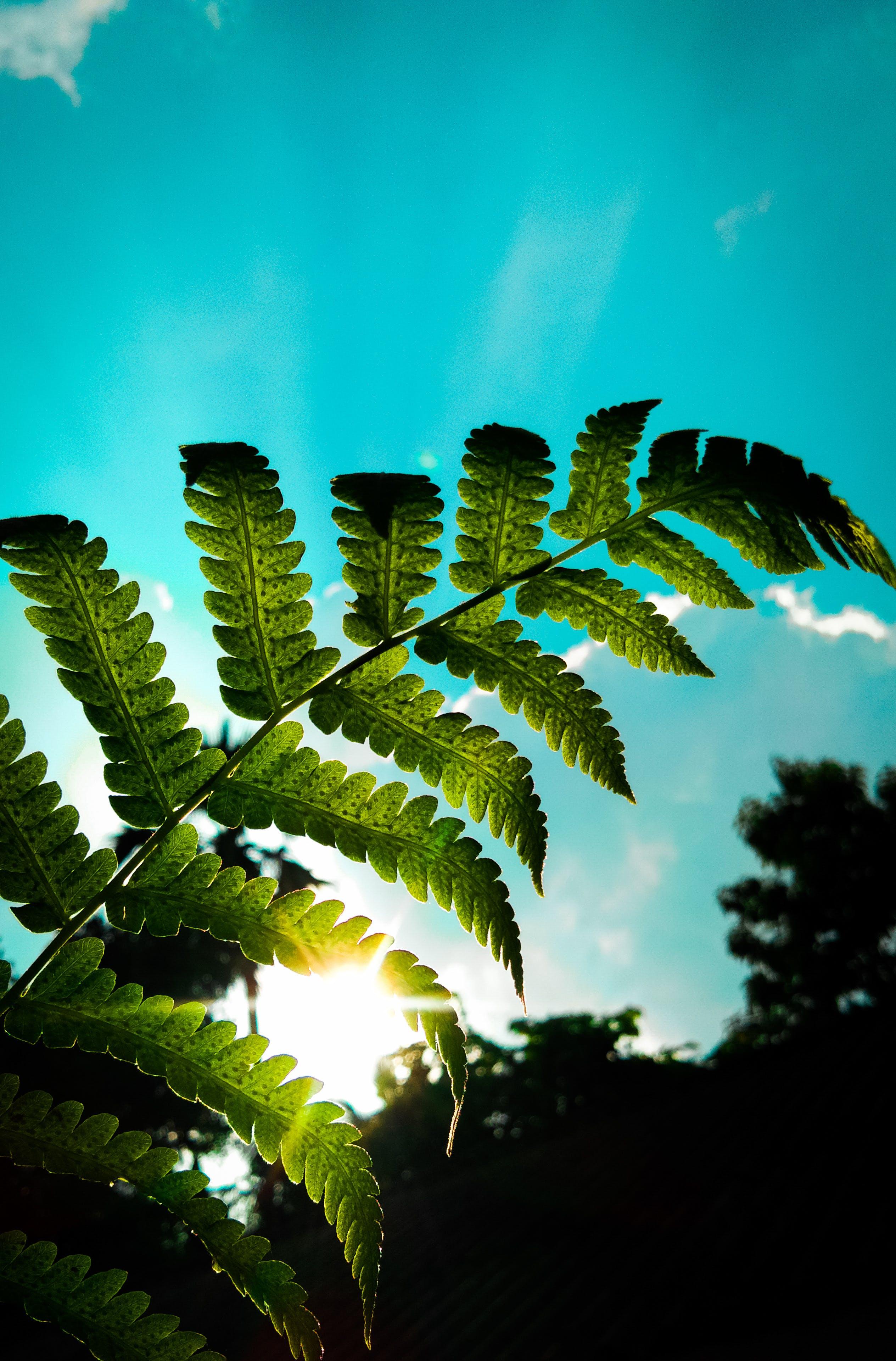 Δωρεάν στοκ φωτογραφιών με ακτίνα ήλιου, γαλάζιος ουρανός, ζωή στη φύση, ηλιαχτίδα