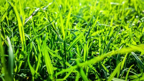 Free stock photo of close-up view, green, green grass, natural beauty