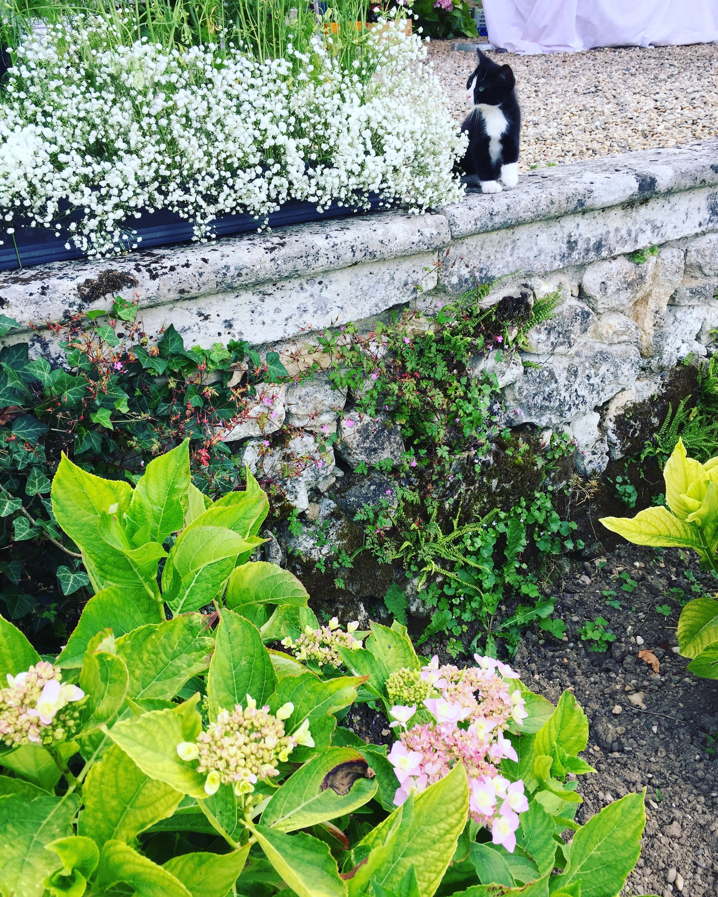 blätter, blumen, flora