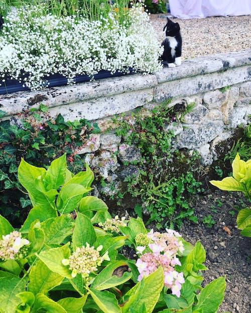 動物, 天性, 植物群, 花 的 免費圖庫相片
