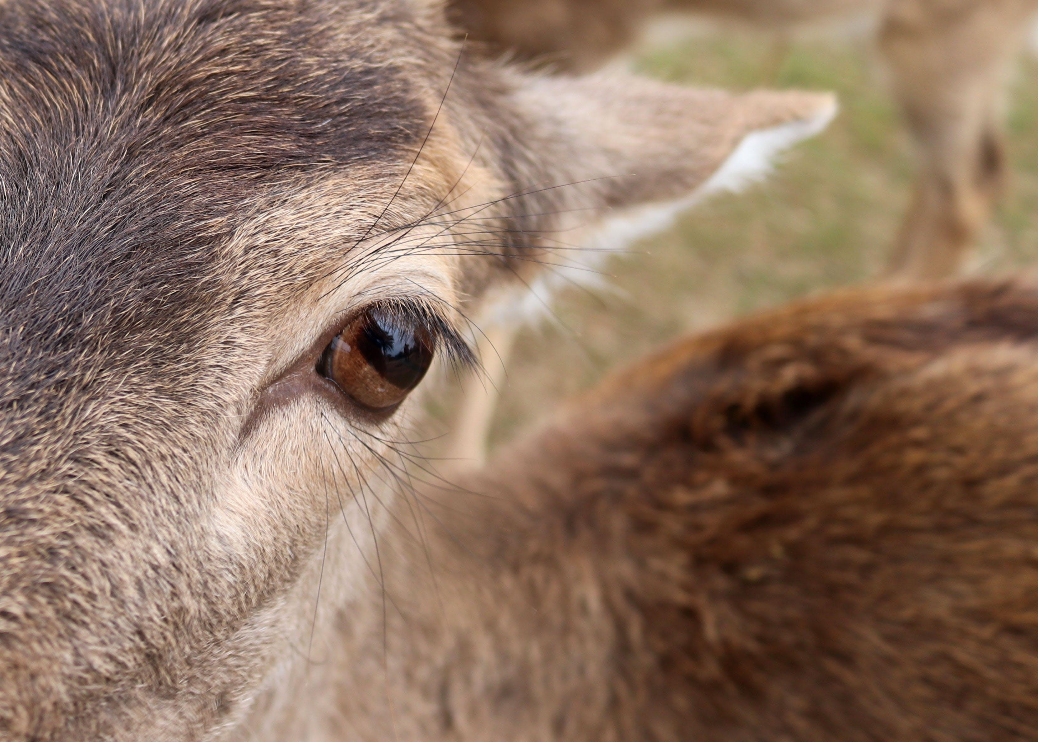 Free stock photo of animal, animals feeding, bison, bovine