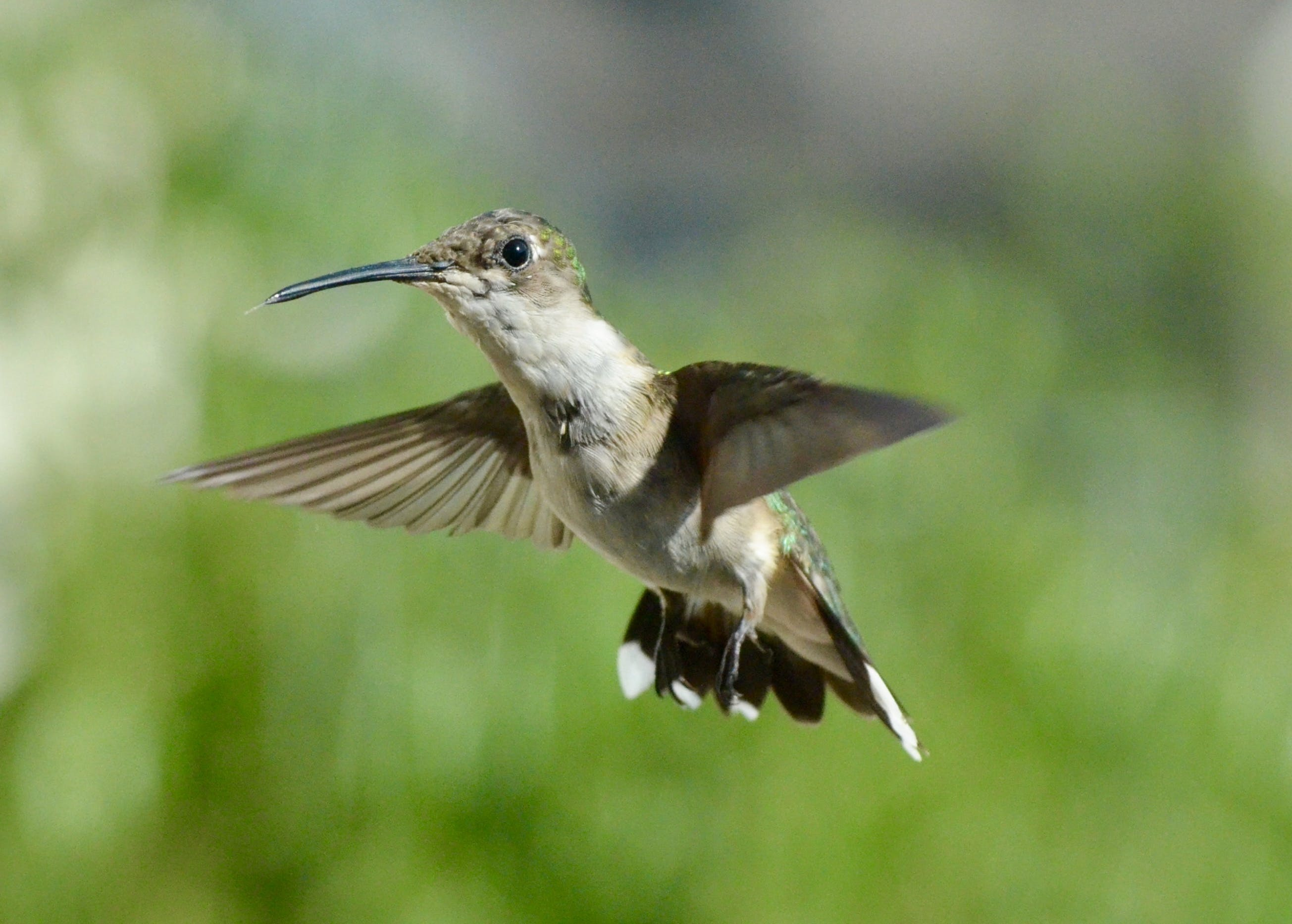 Selective Photography Of Hummingbird