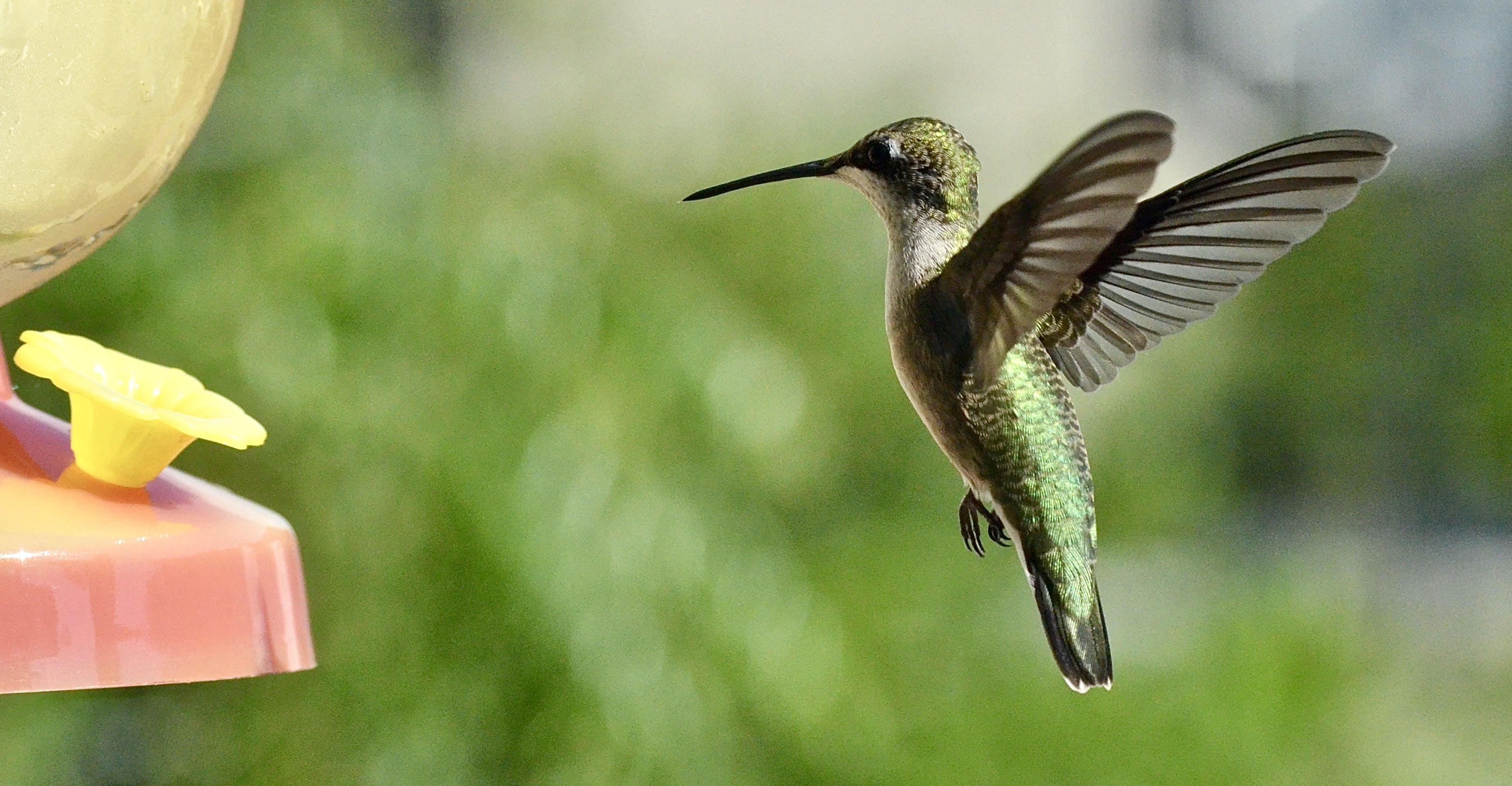 Green Bird Are Flying