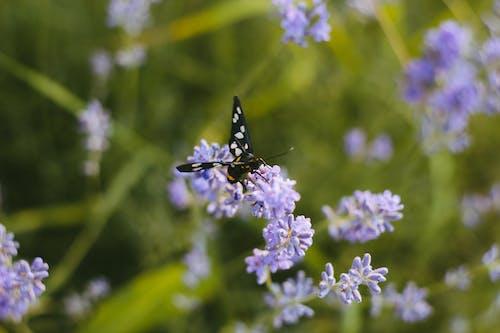 Ingyenes stockfotó fű, pillangó, virágok, zöld témában