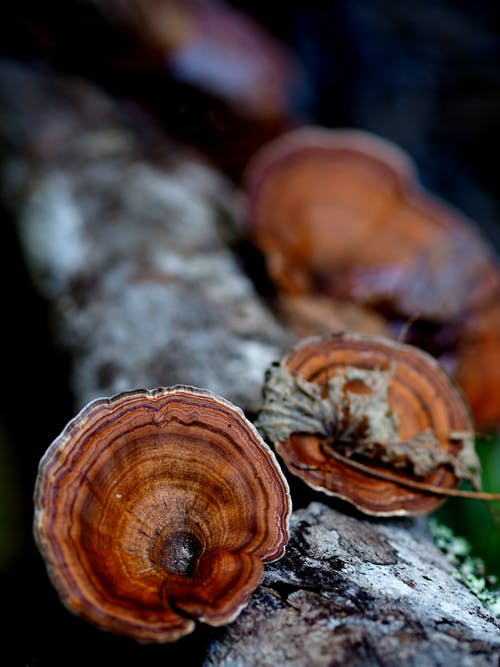Gratis stockfoto met boomstam, bospaddenstoel, drijfhout, fungus