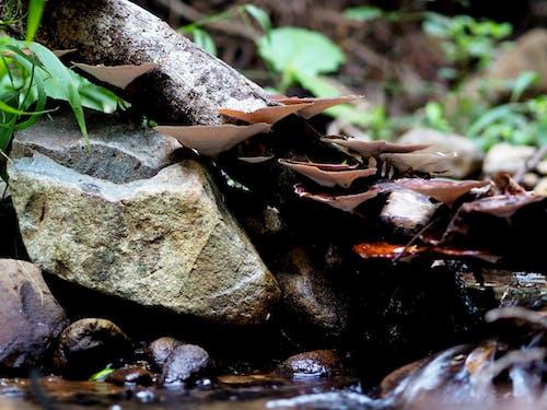 Gratis stockfoto met Bemoste rotsen, boomstam, bospaddenstoel, champignons