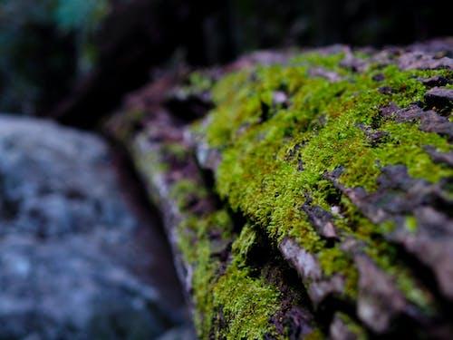 Бесплатное стоковое фото с бревно, дерево, жизнь, зеленый