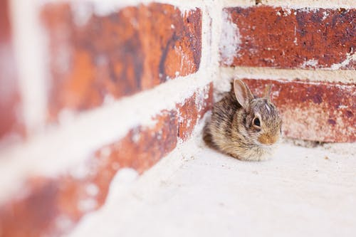 Gray and Brown Rabbit on Wall Corner