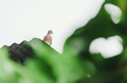 棕色的鸟,站在屋顶的顶部