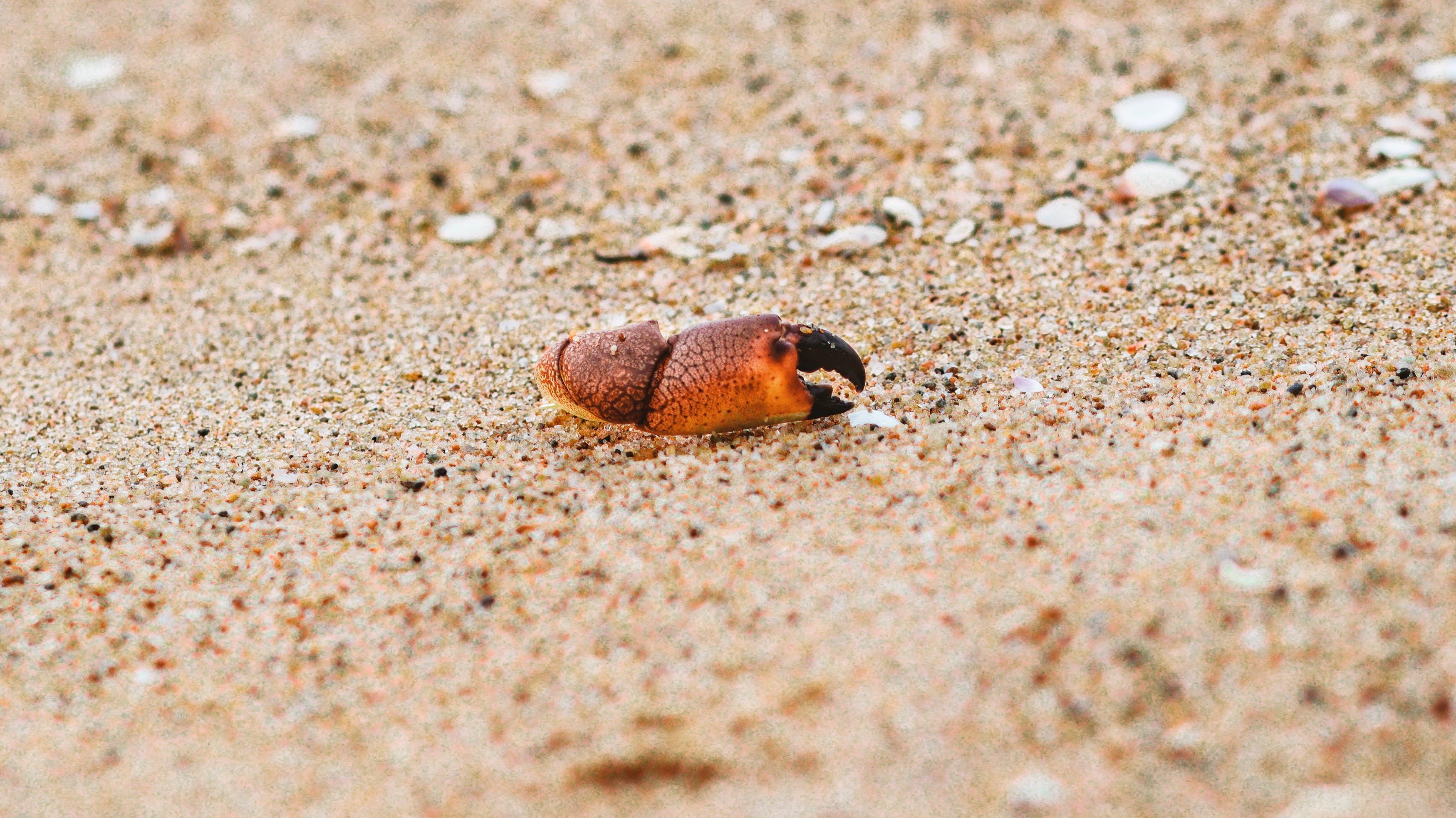 Free stock photo of #crab #ocean #sand #hand #sea #mud #sharp #broken