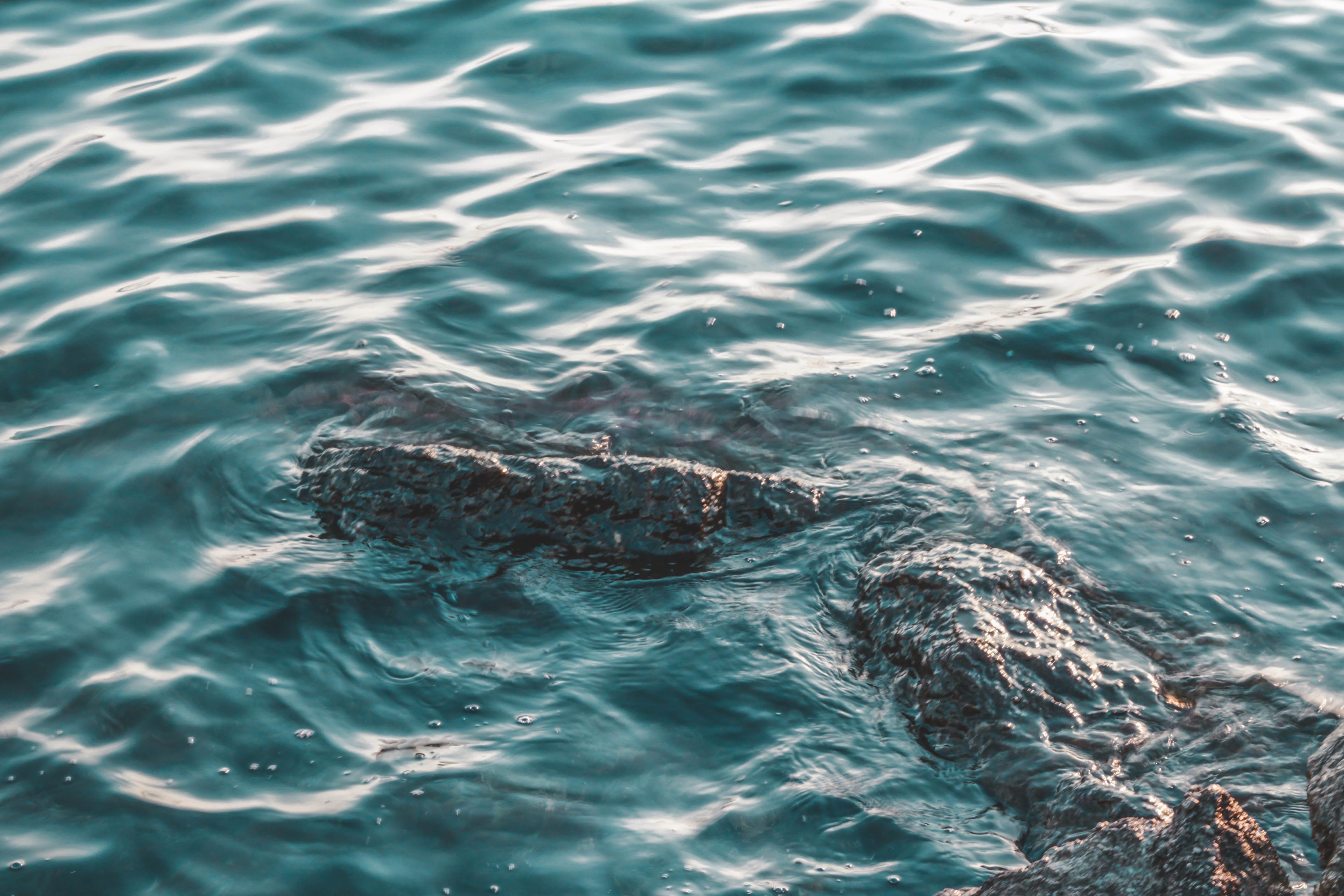 Free stock photo of sea, water