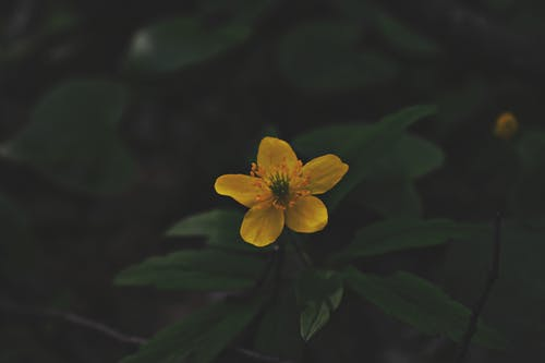 Close Photo of Yellow Petaled Flower