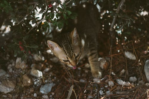 Ingyenes stockfotó állat, aranyos, cica, cserje témában