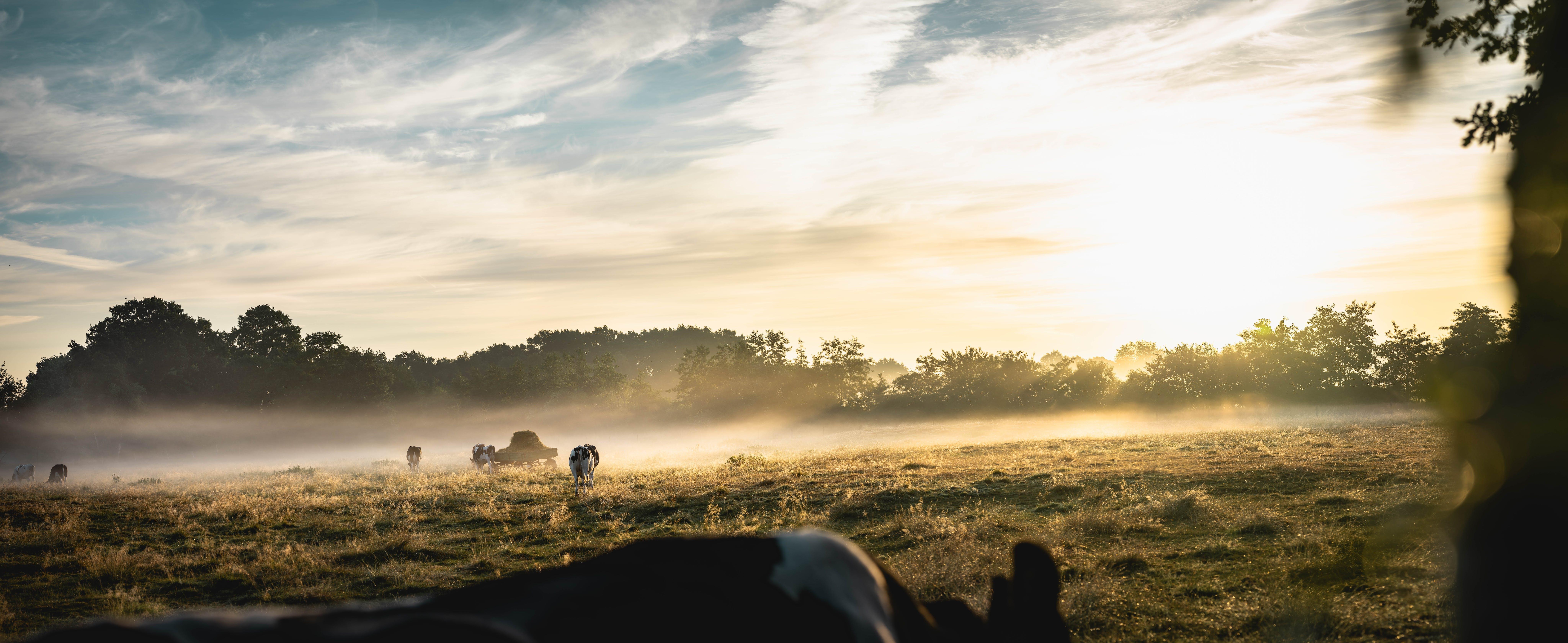 Animals Walking on Grass Field