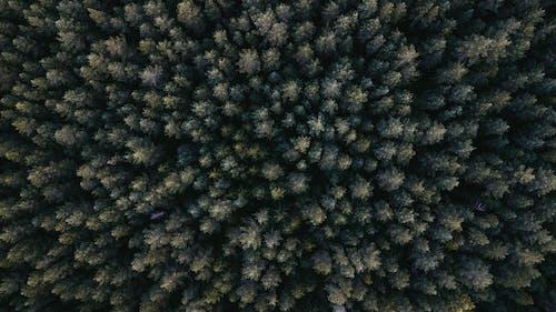 緑の葉の木の航空写真