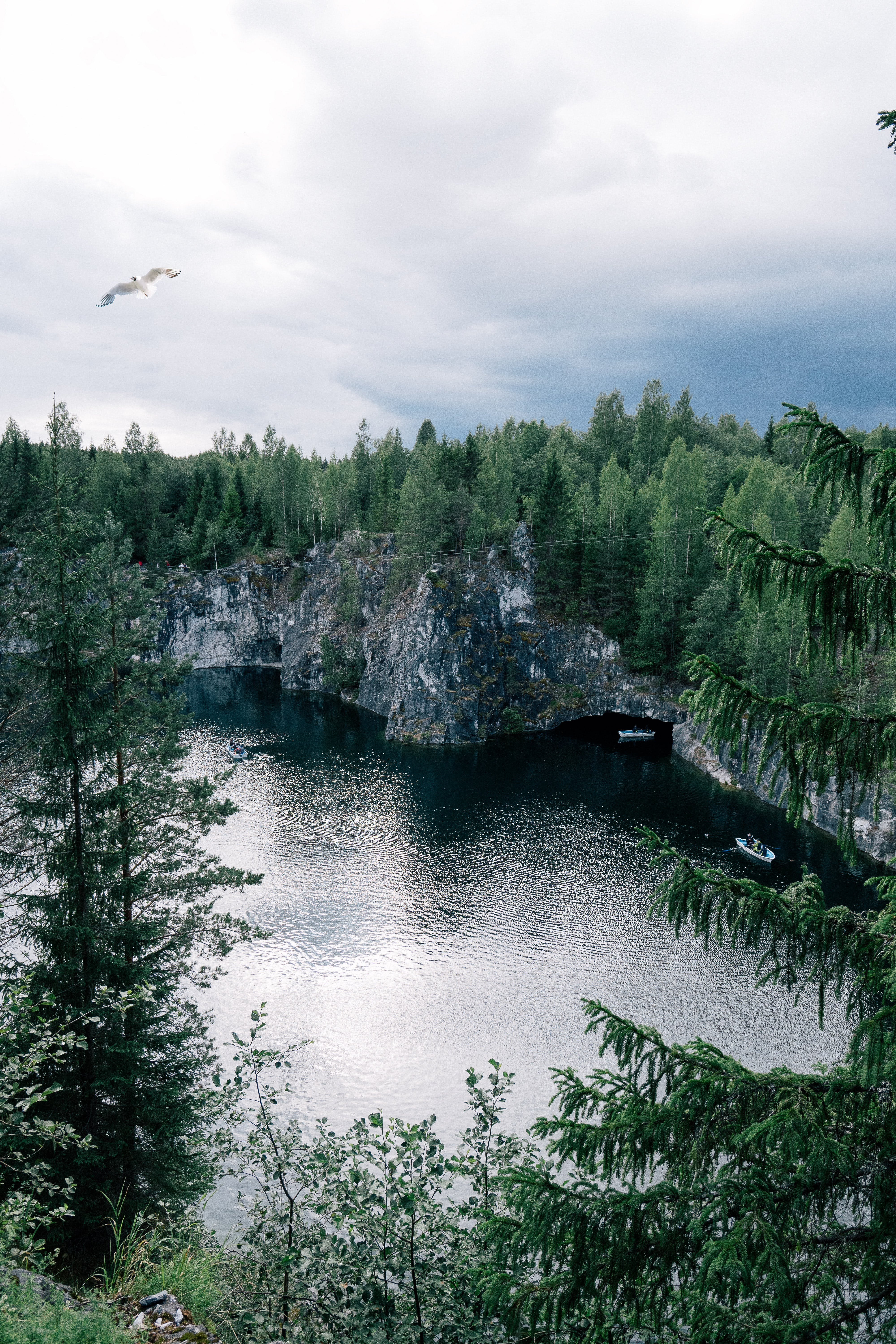 Birds Eye Photography of Body of Water Between Tall Trees