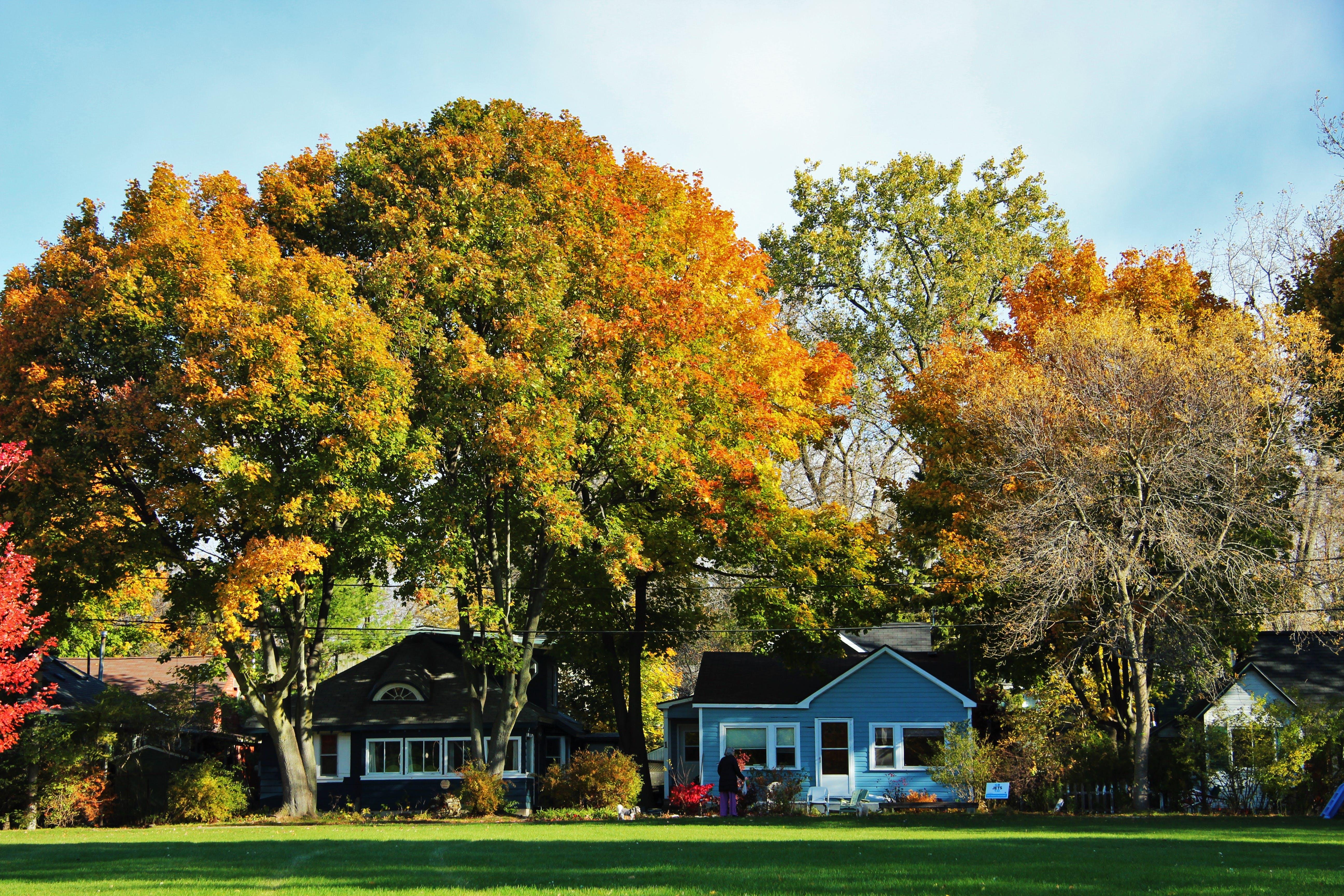 Free stock photo of autumn, suburb, suburban