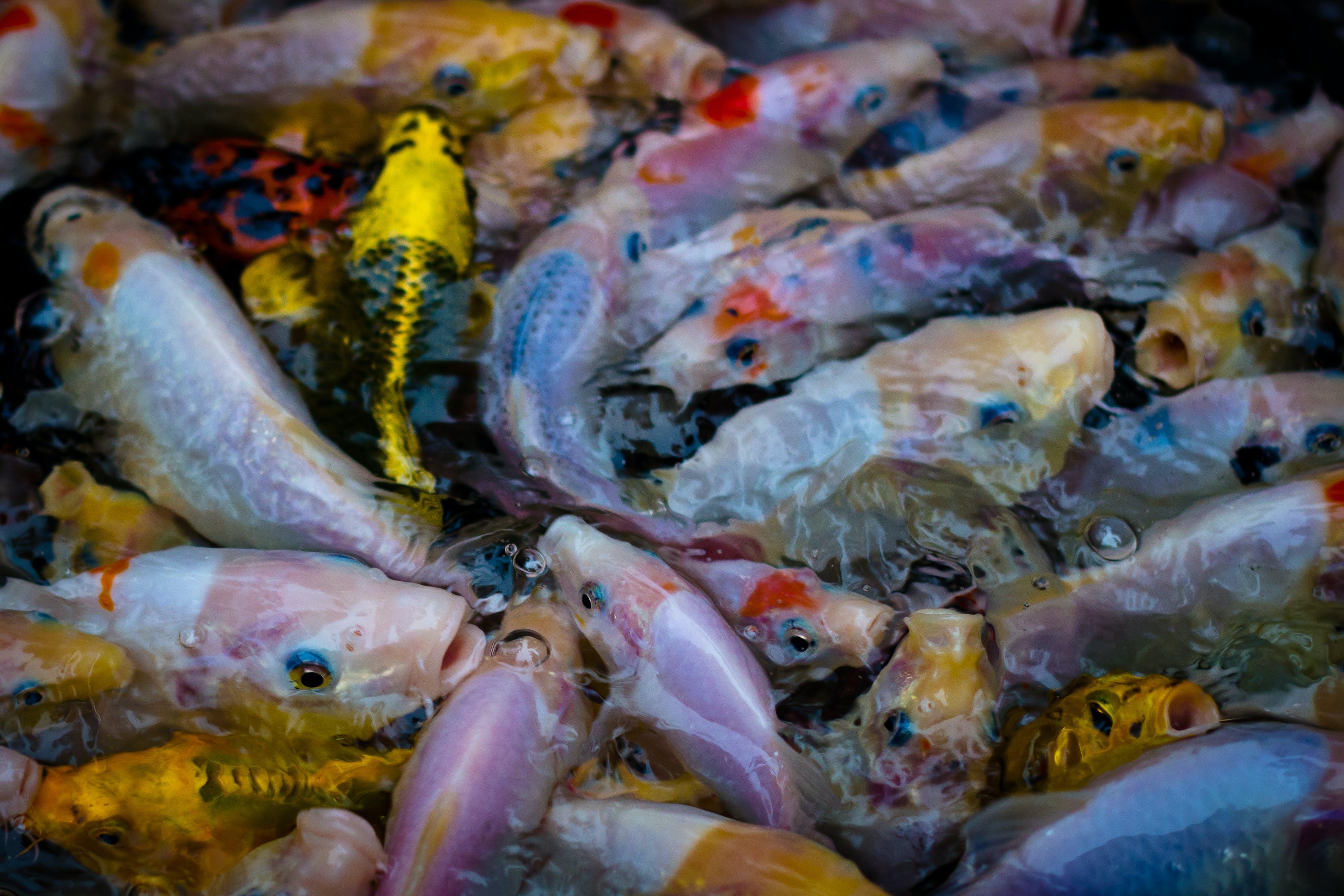 Free stock photo of fish, school of fish