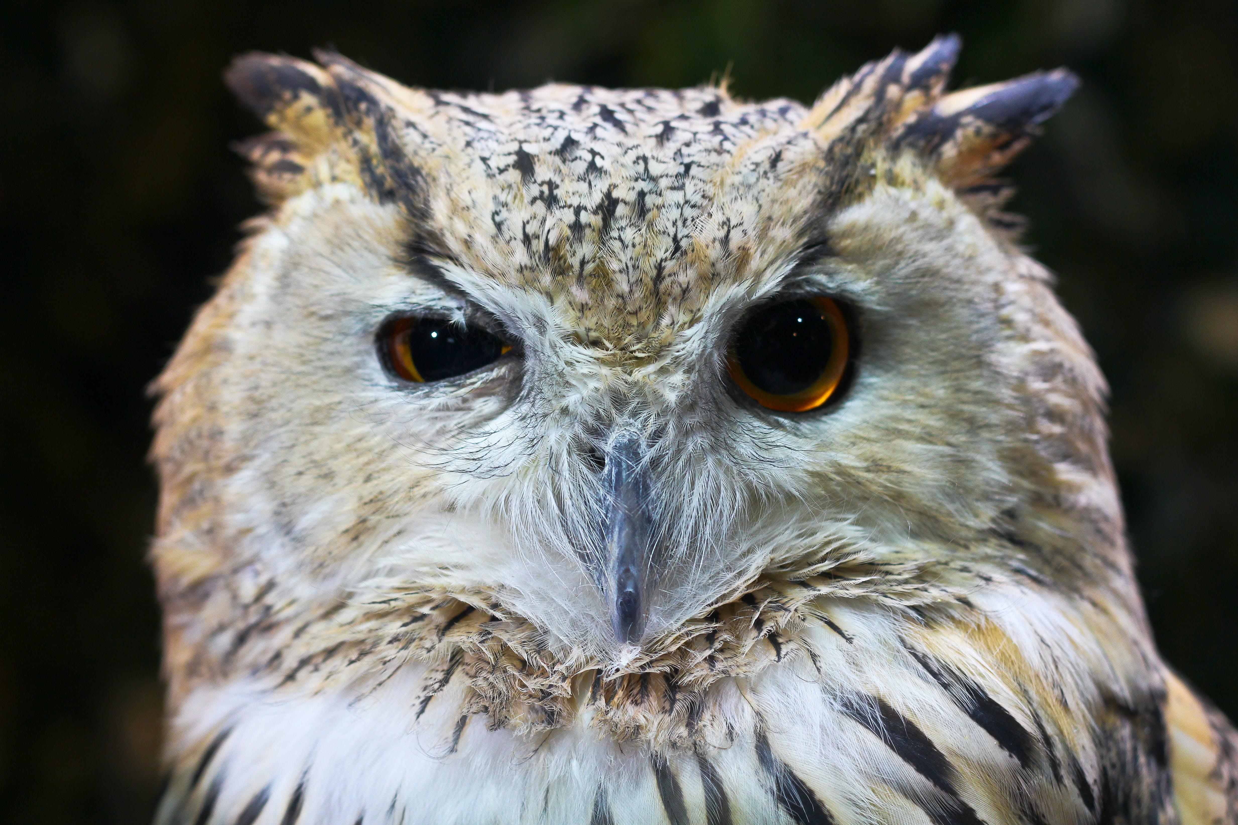 Kostnadsfri bild av djur, fjädrar, jägare, närbild