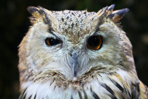 Closeup Photography of White and Brown Owl