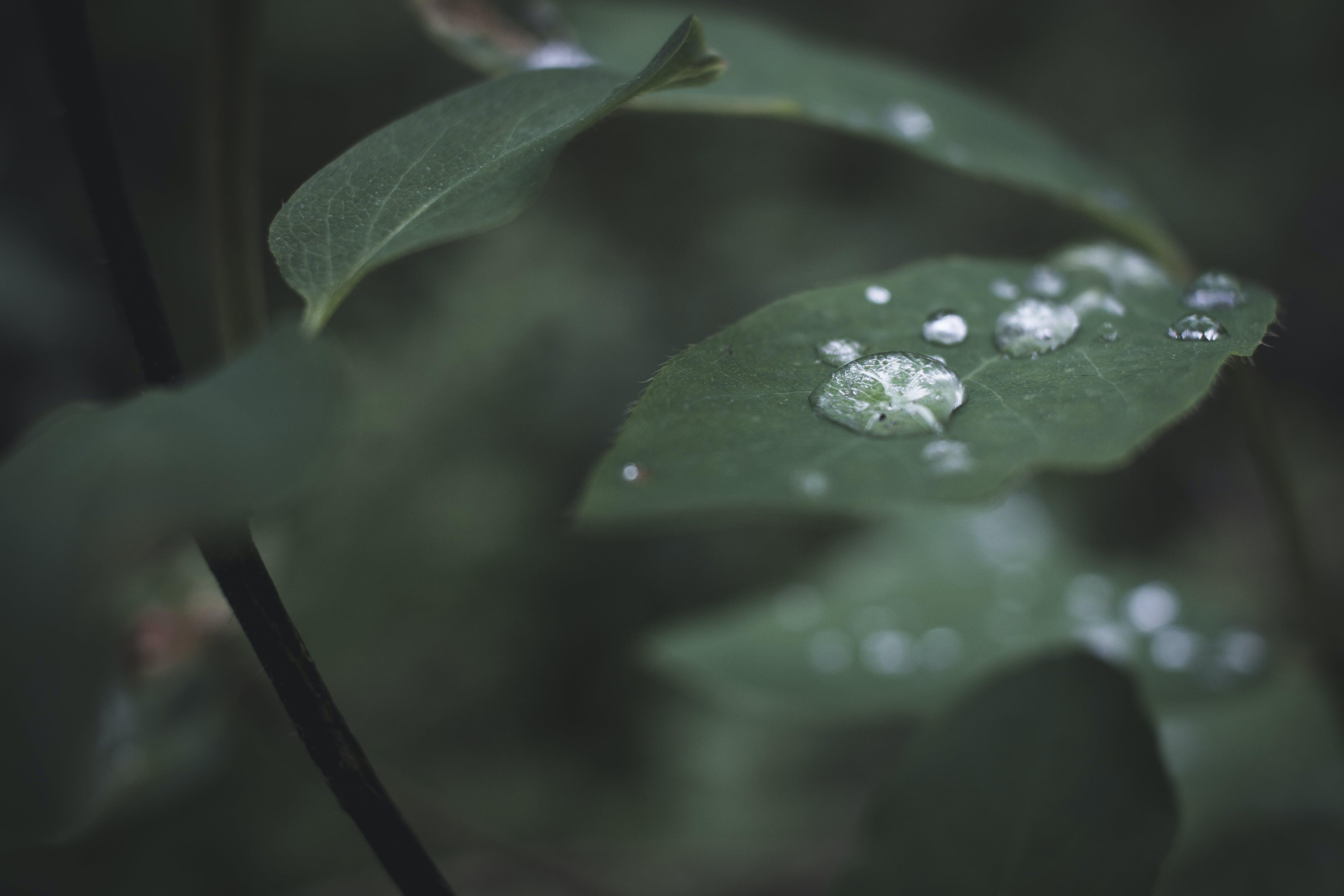 Free stock photo of drop, water
