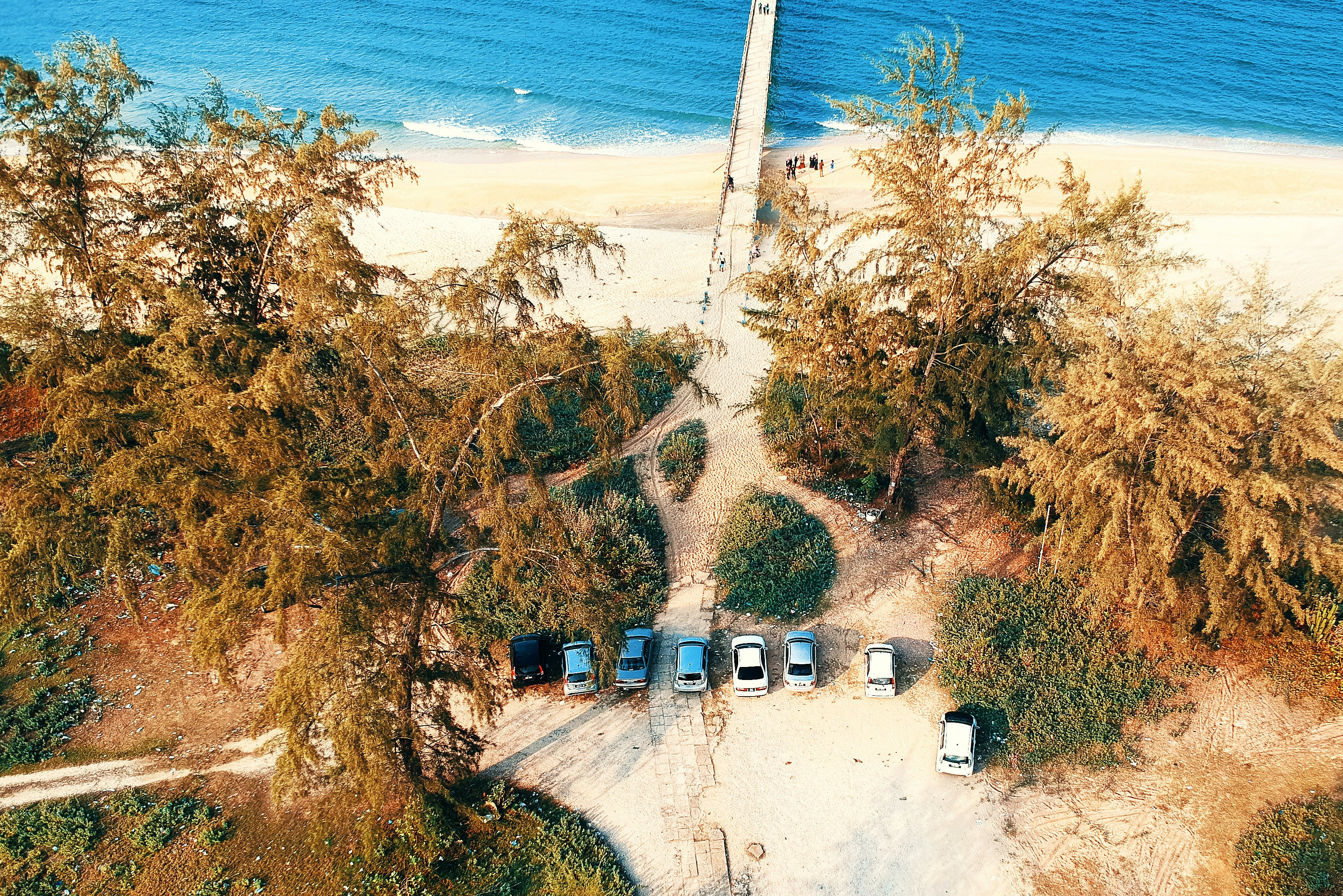 Seven Vehicle Park Under Green Leaf Tree Near Ocean Shore Aerial Photography