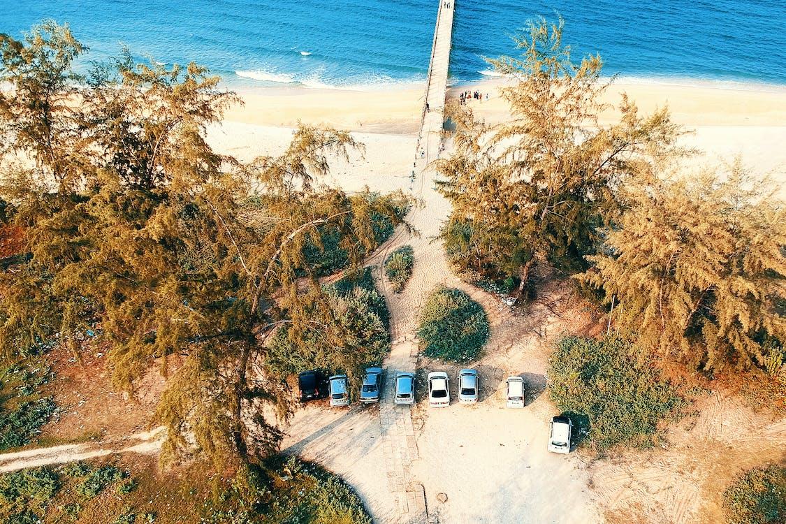 arbres, bord de mer, côte