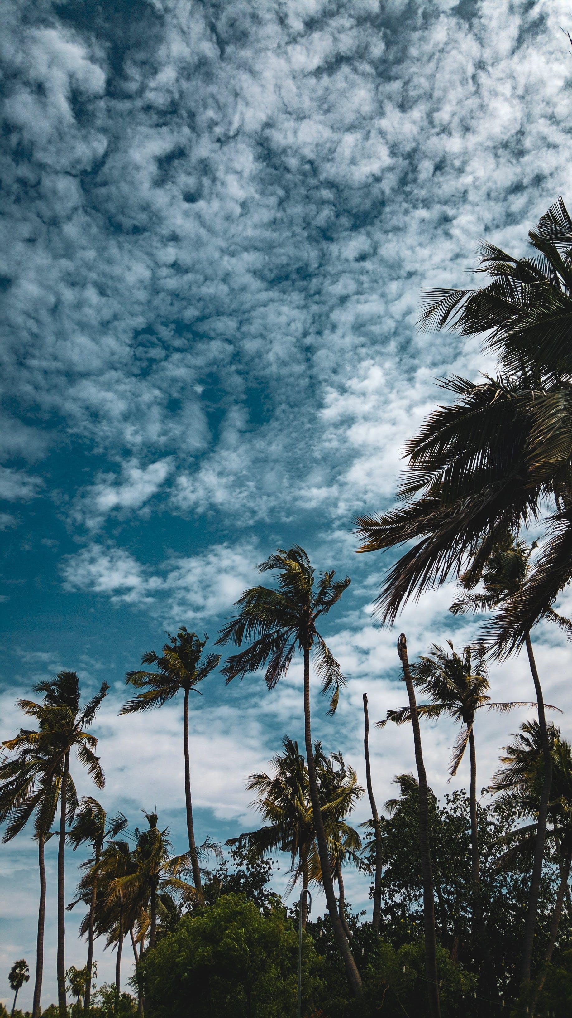 Photos gratuites de arbres, ciel, cocotiers, jour