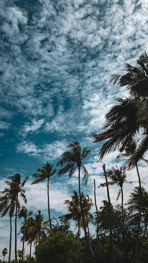 Coconut Trees Under Cloudy Sky