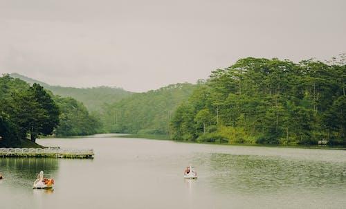 Imagine de stoc gratuită din apă, apă curgătoare, arbori, bărci