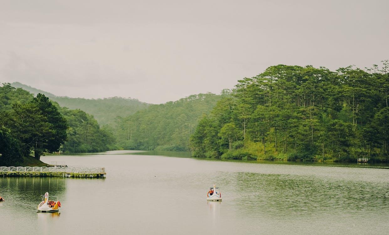 acqua, alberi, barche