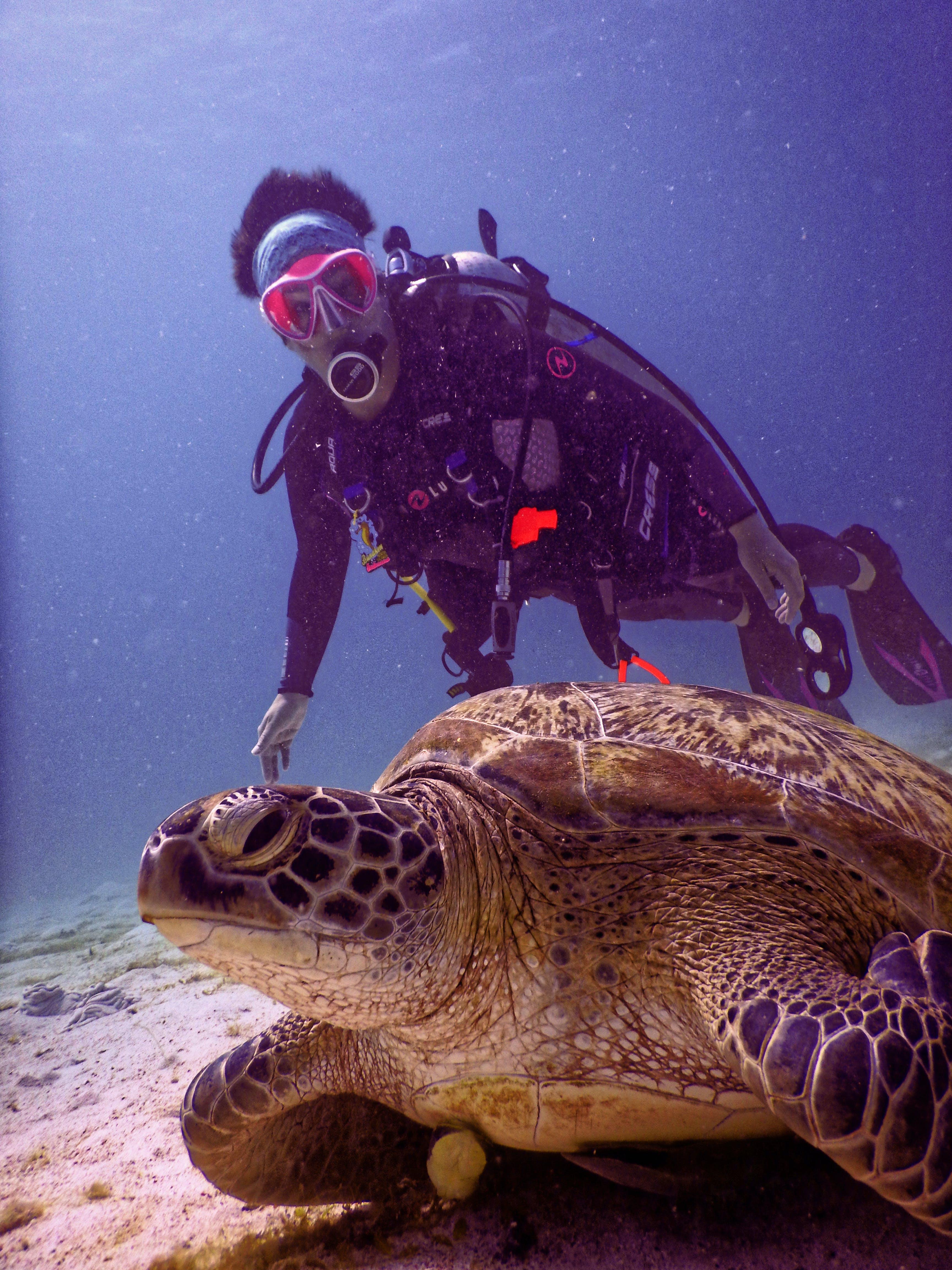 Scubadiver Near Brown Turtle