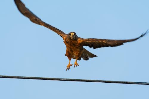Imagine de stoc gratuită din animal, aripi, aviar, avion