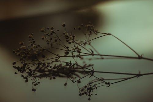 枯れた花のクローズアップ写真
