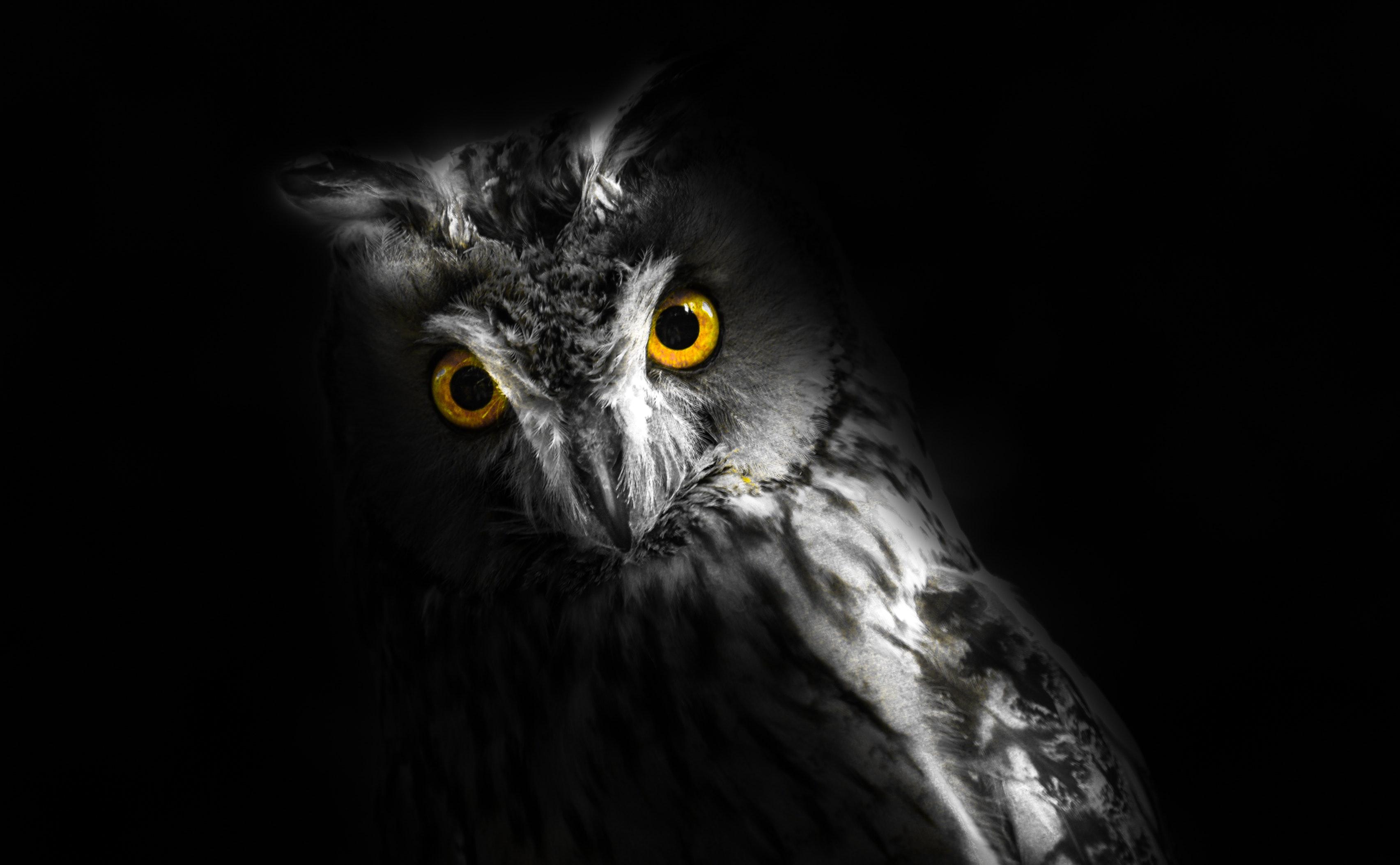 Gray Owl Free Stock Photo