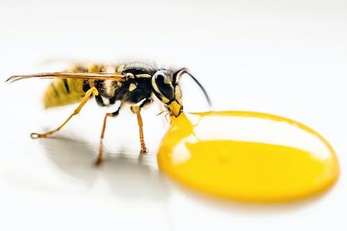 Foto profissional grátis de abelha, alimentação, amarelo, animal