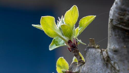 Foto stok gratis bunga, dari dekat, kebun, makro