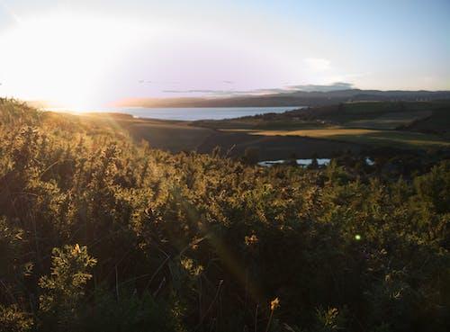 Ilmainen kuvapankkikuva tunnisteilla appelsiini, auringonlasku, kontrasti, kultainen